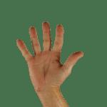 Lingua dei segni italiana: ruolo, funzione e applicazione – Ambito didattico educativo – professionale – 60 CFU