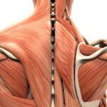 Elementi di anatomia umana